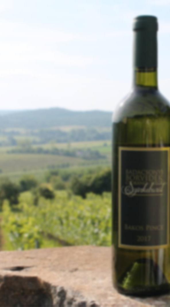 Vertikális Pinot Gris  - Bakos Pincészet Csobánc