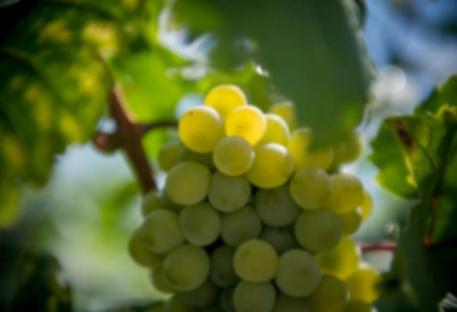 6 szőlőfajta 6 bor